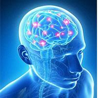 บำรุงสมองและความจำ