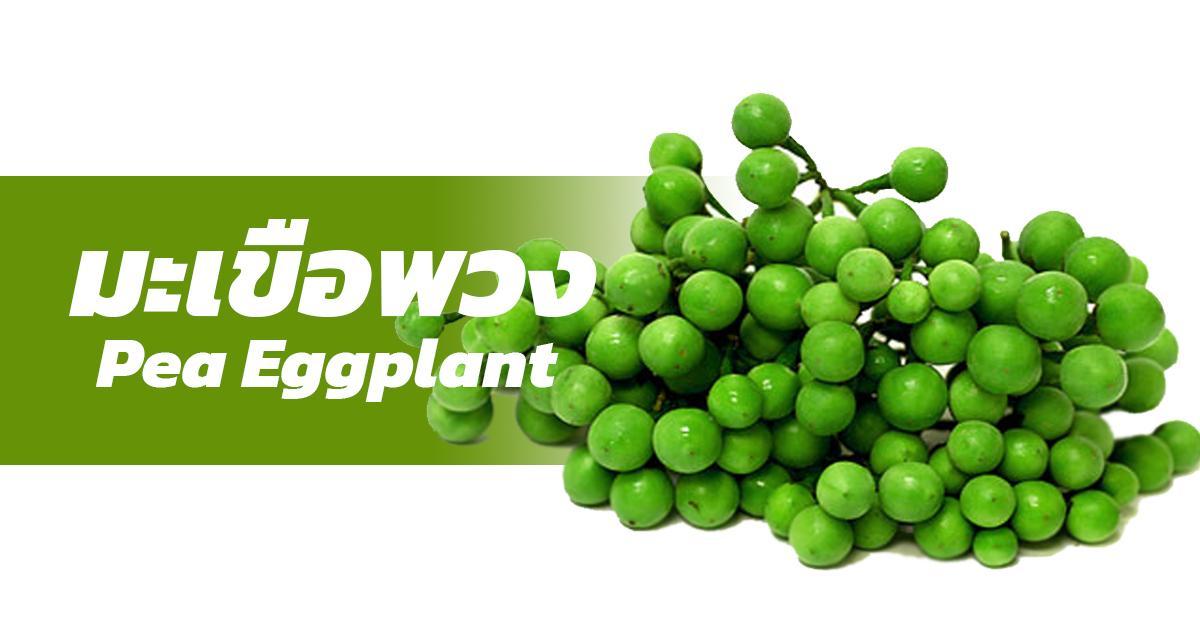 Pea Eggplant (มะเขือพวง)