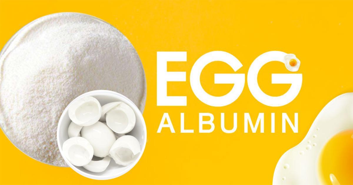 Egg Albumin Powder (อัลบูมิน ไข่ขาว)