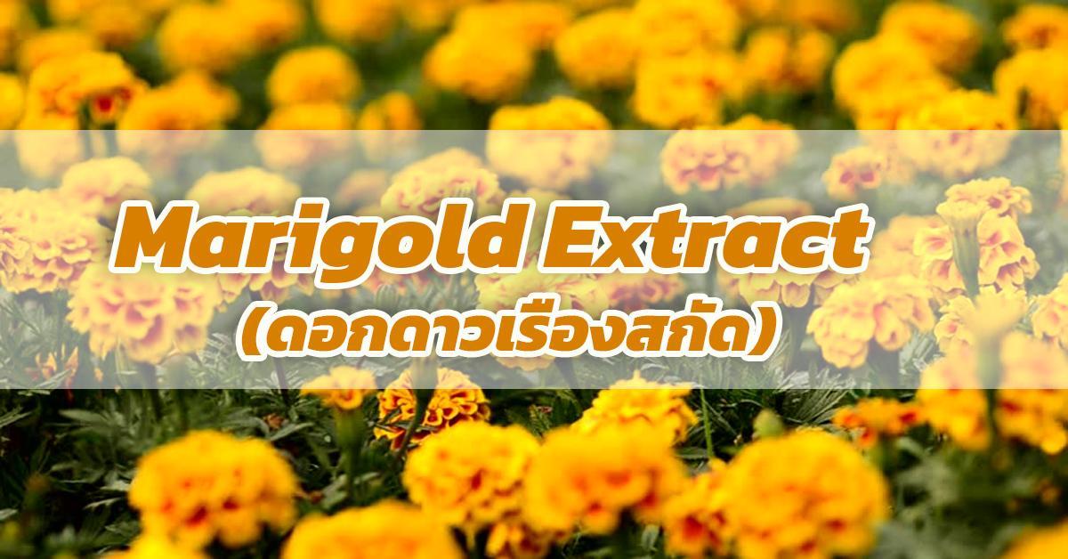 Marigold Extract (ดอกดาวเรืองสกัด)