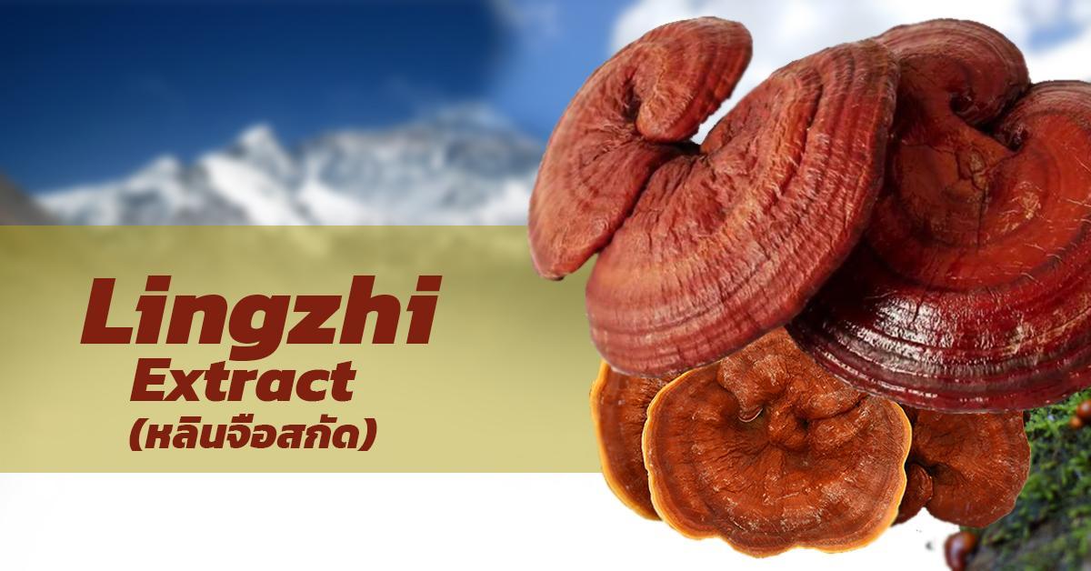 Lingzhi Extract (หลินจือสกัด)