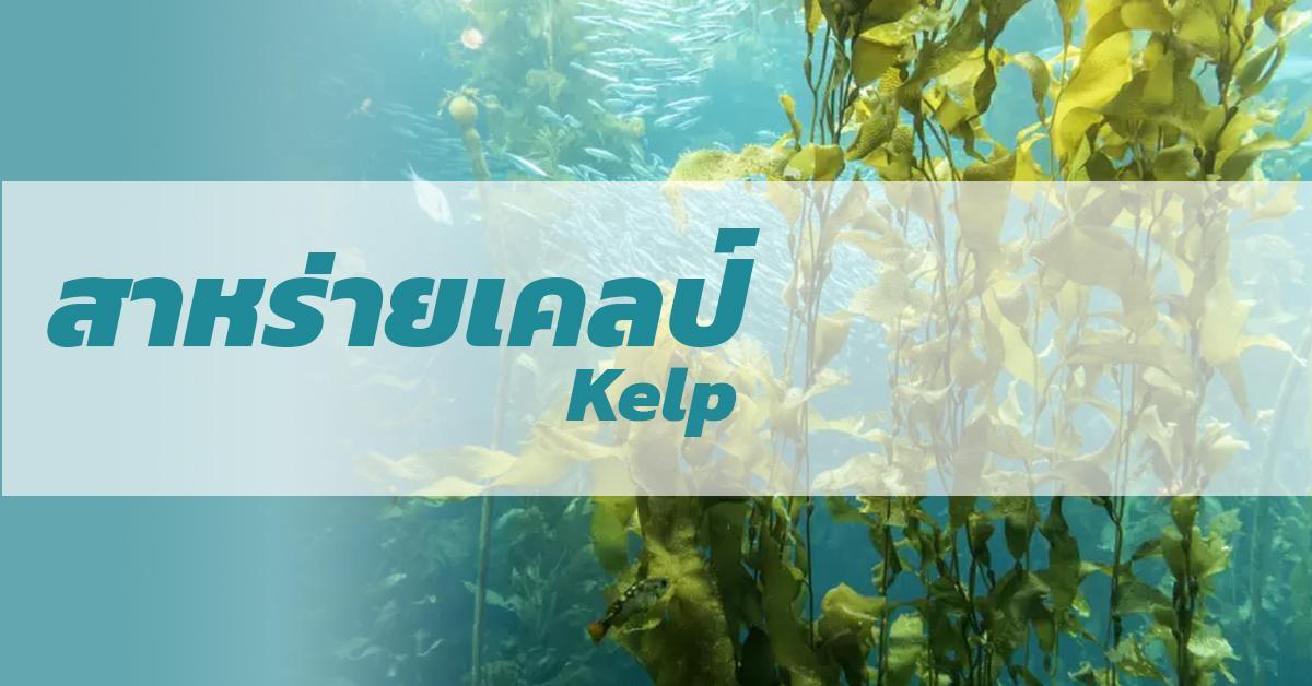 Kelp (สาหร่ายเคลป์)