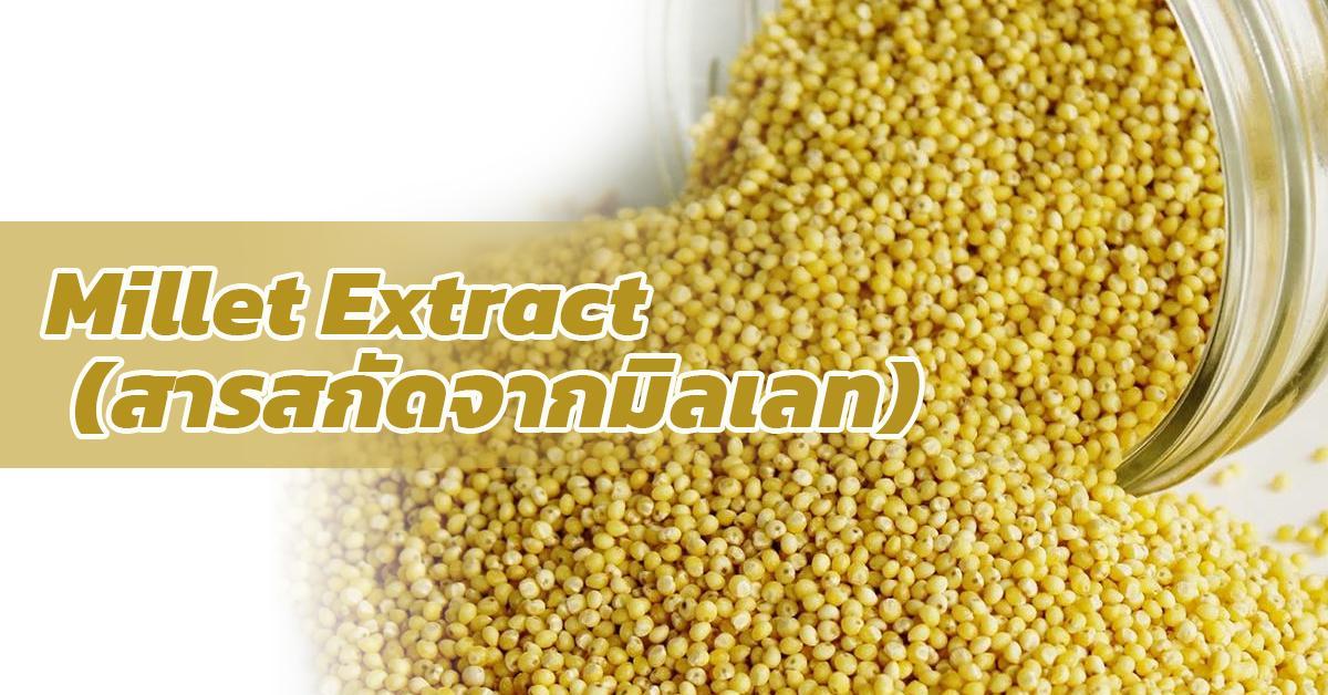 Millet Extract (สารสกัดจากมิลเลท)