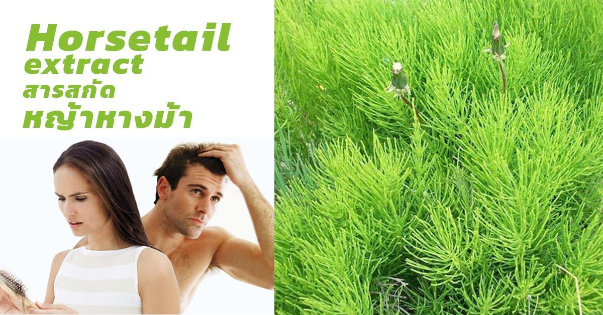 Horsetail extract (สารสกัดหญ้าหางม้า)