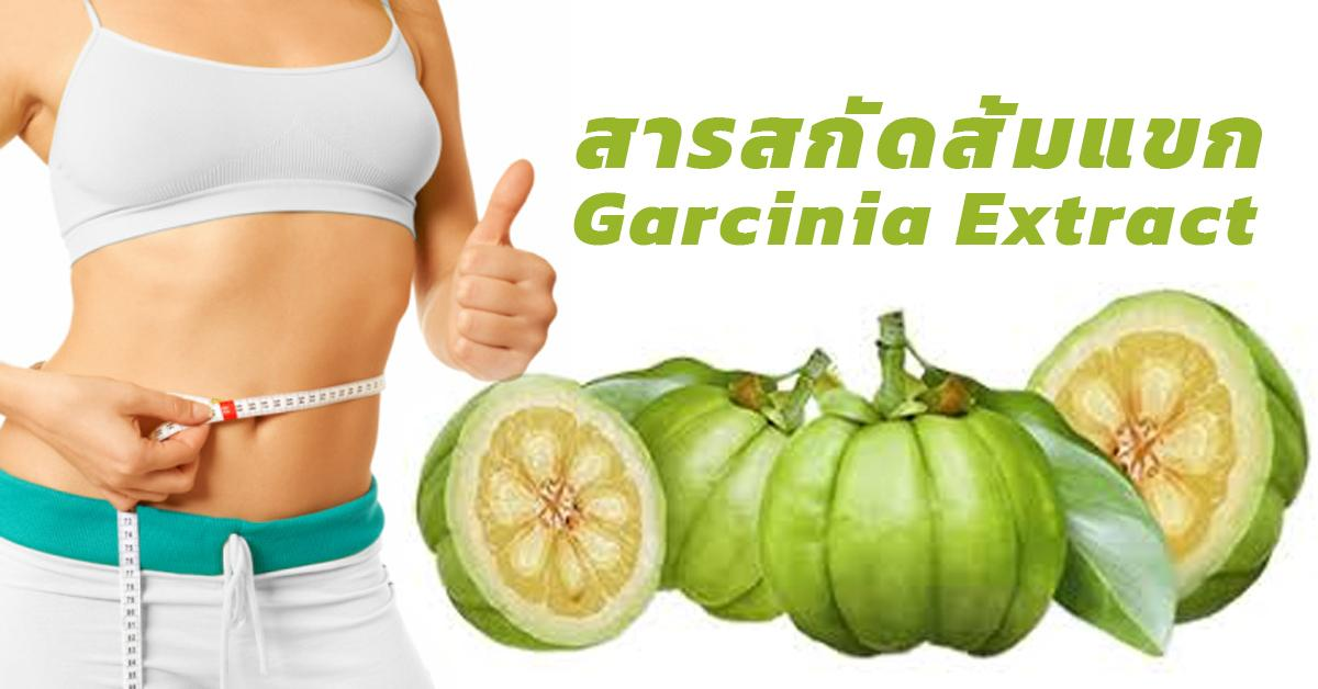 Garcinia Extract (สารสกัดส้มแขก)