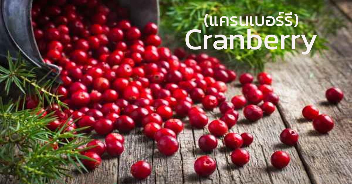 Cranberry (แครนเบอร์รี่)