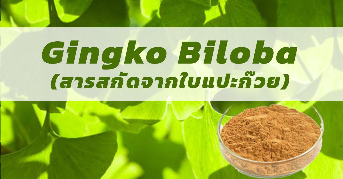 Gingko Biloba (สารสกัดจากใบแปะก๊วย)