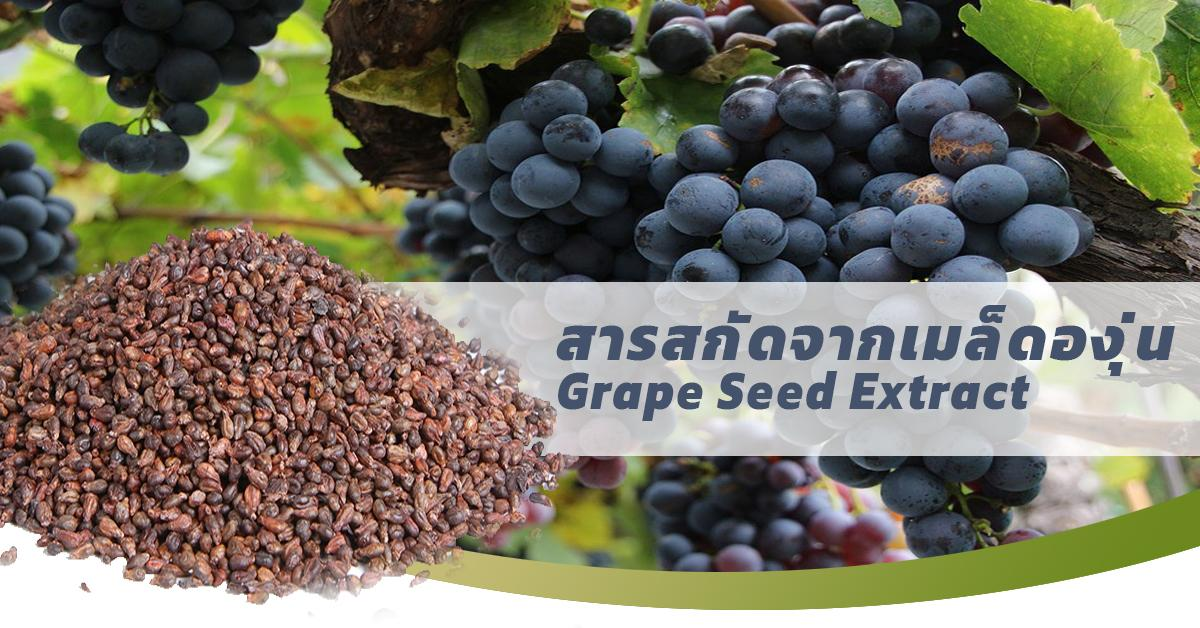 Grape Seed Extract (สารสกัดจากเมล็ดองุ่น)