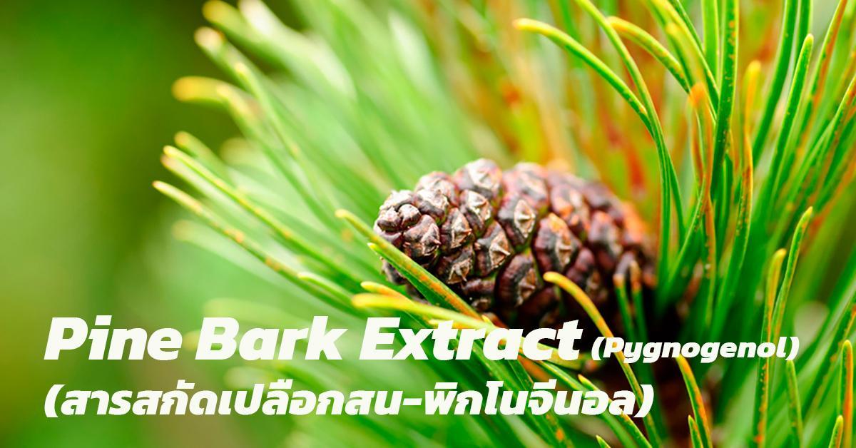 Pine Bark Extract (Pycnogenol) (สารสกัดเปลือกสน-พิกโนจีนอล)
