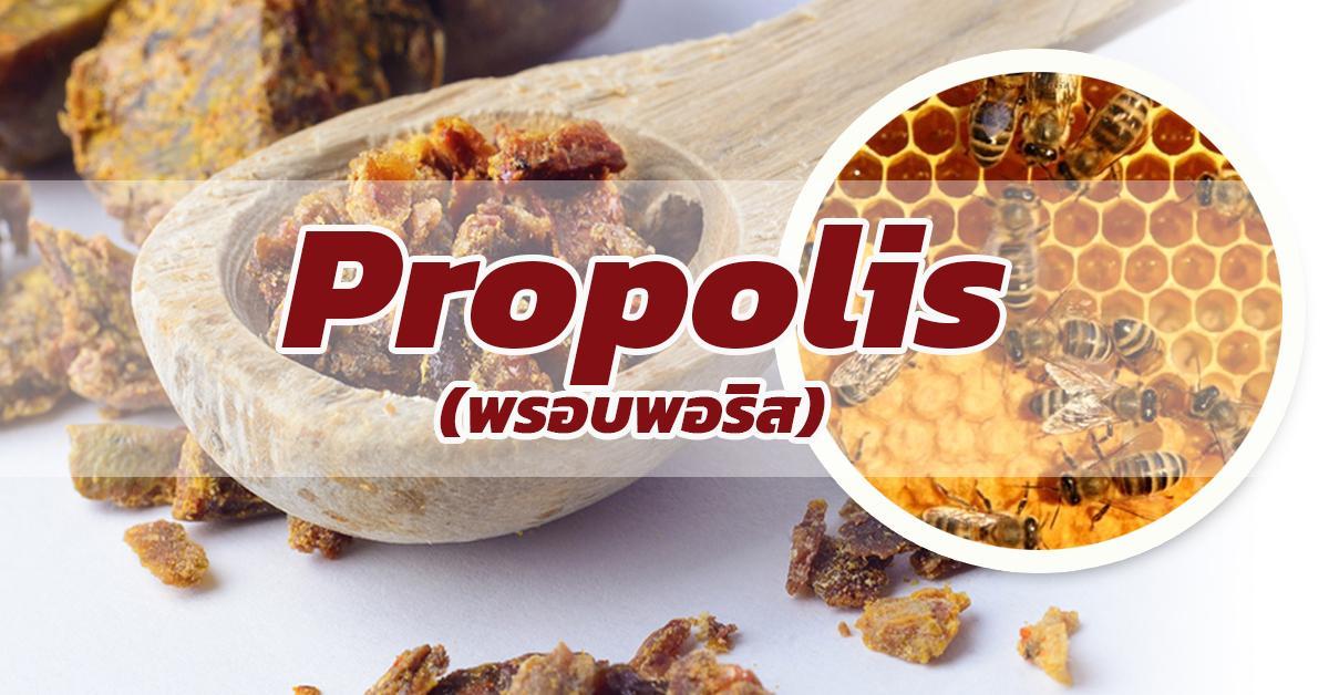 Propolis (พรอบพอริส)