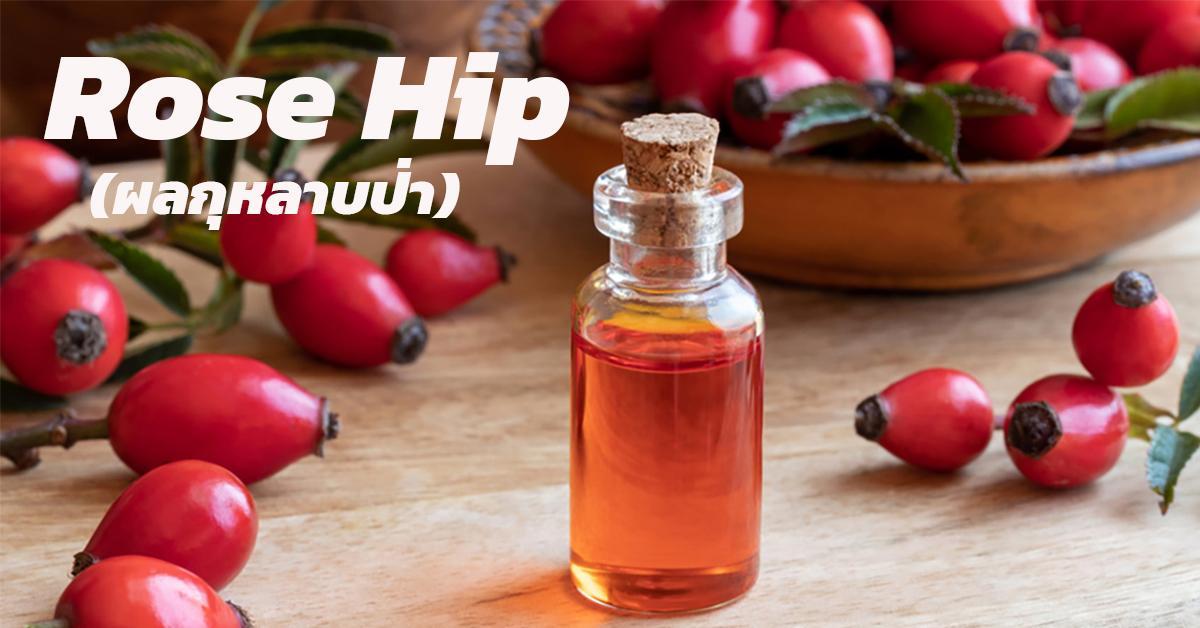 Rose Hip (ผลกุหลาบป่า)