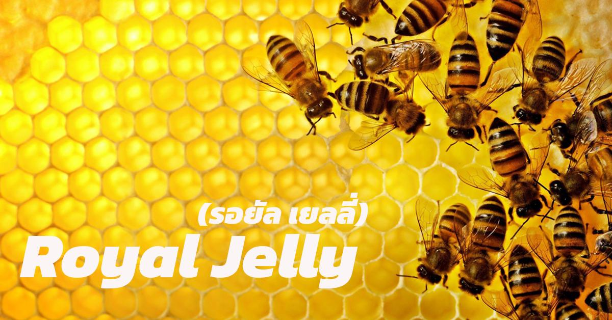 Royal Jelly (รอยัล เยลลี่)