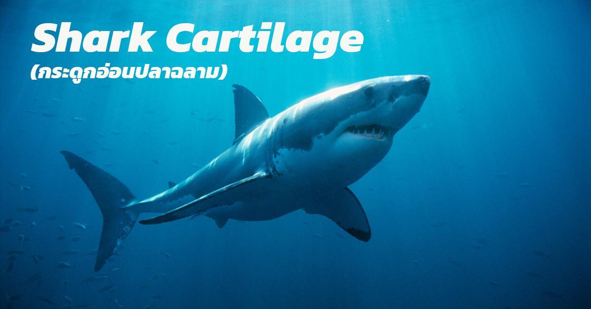 Shark Cartilage (กระดูกอ่อนปลาฉลาม)