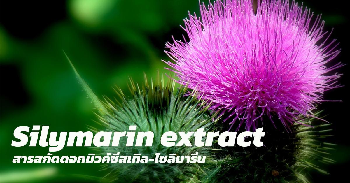 Silymarin extract (Milk Thistle)(สารสกัดดอกมิวค์ซีสเทิล-ไซลิมารีน)