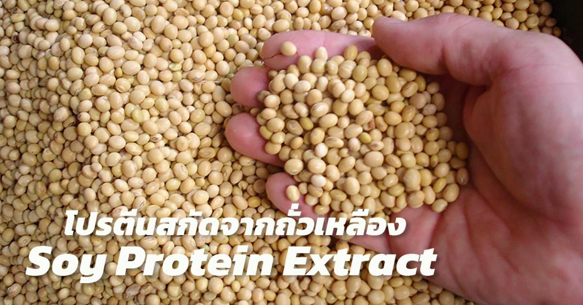 โปรตีนสกัดจากถั่วเหลือง (Soy Protein Extract)