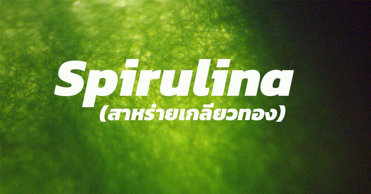 Spirulina (สาหร่ายเกลียวทอง)