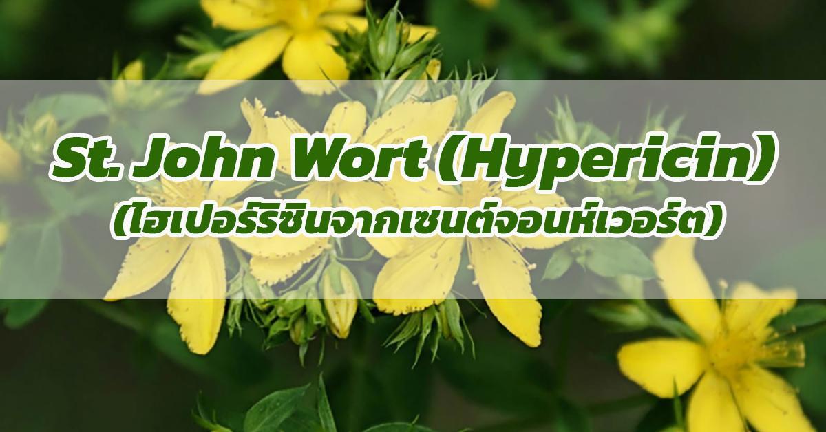 St. John Wort (Hypericin) (ไฮเปอร์ริซินจากเซนต์จอนห์เวอร์ต)