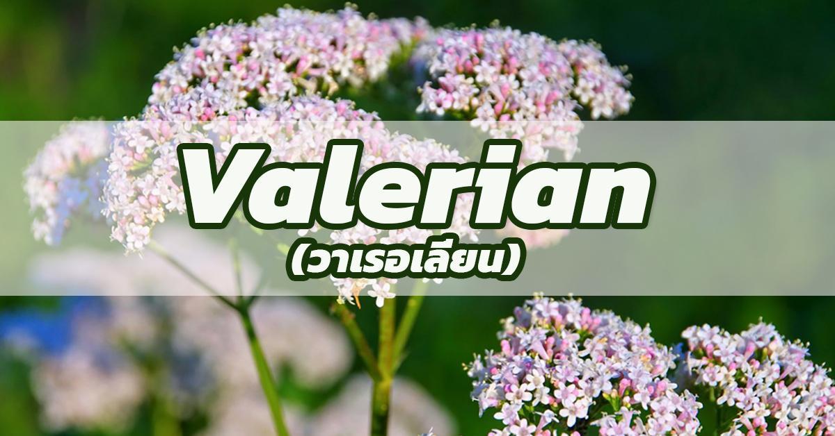 Valerian (วาเลอเลี่ยน)